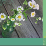 June-Wallpaper-small_thumb.png